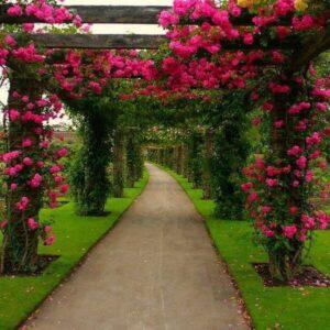 pergolado com trepadeiras e flores